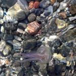 Lipari-meduse