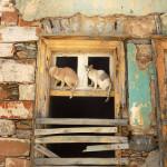 ermoupoli-chats